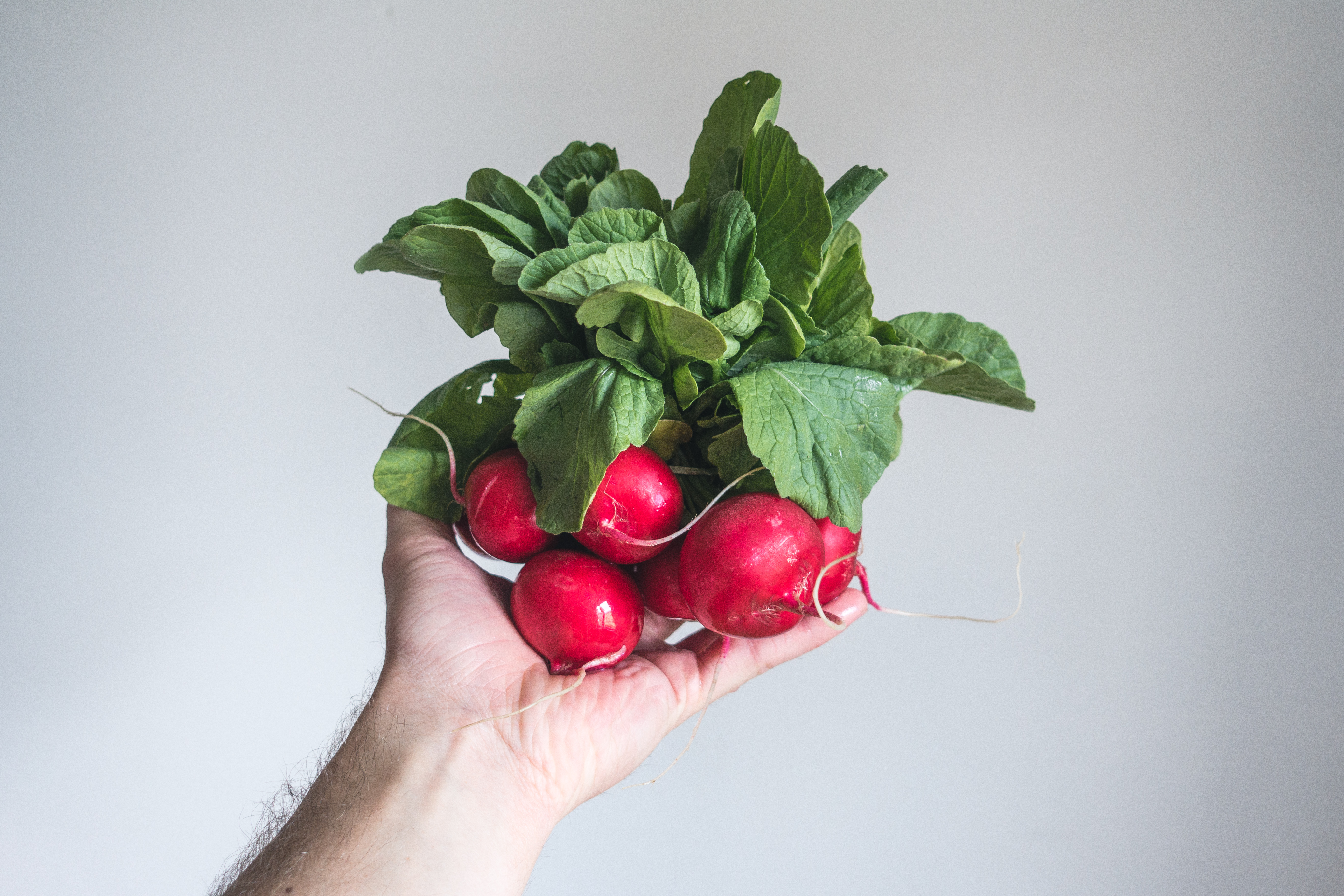 Holding fresh radishes in hand