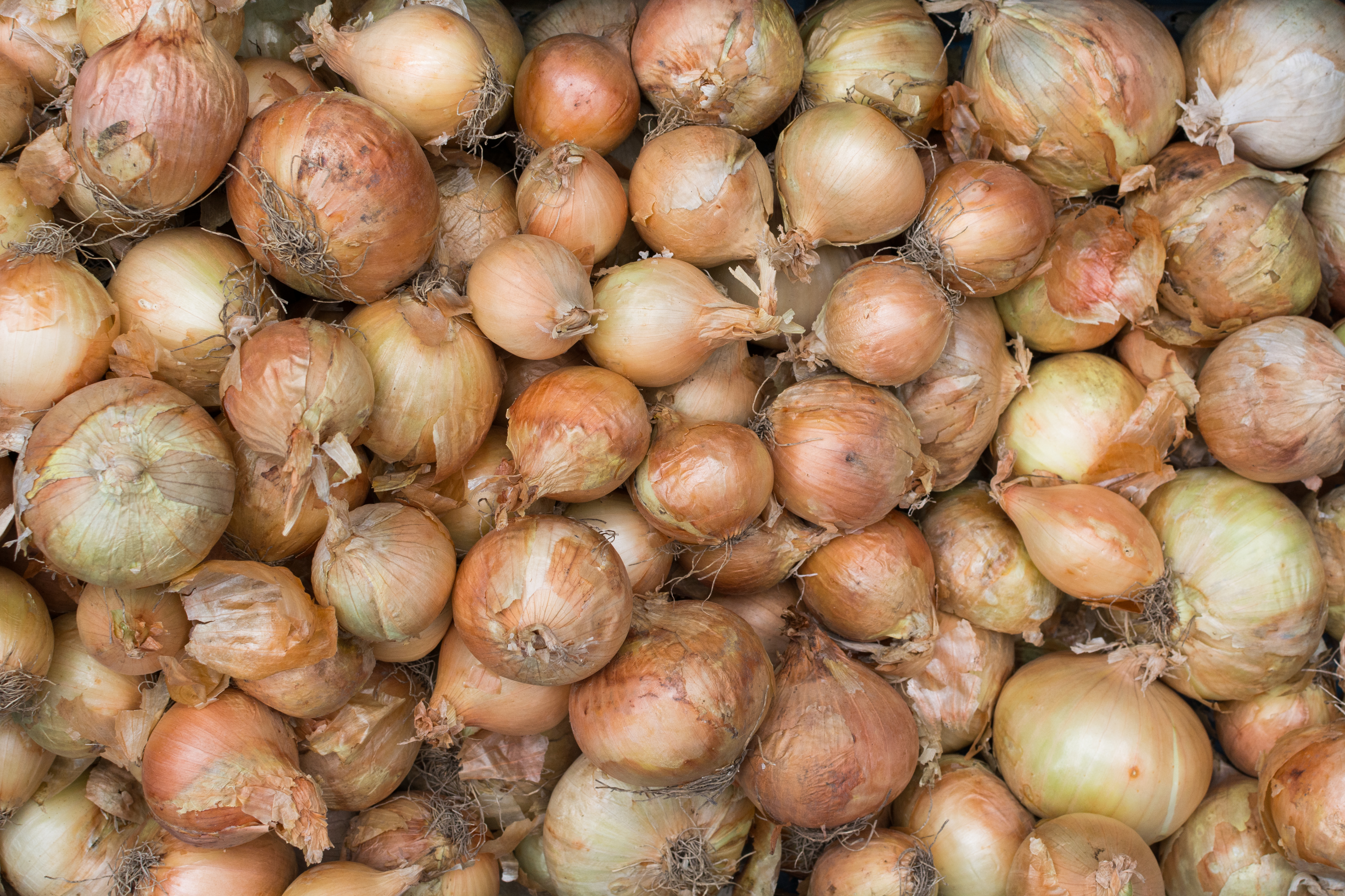 Onions on onions on onions